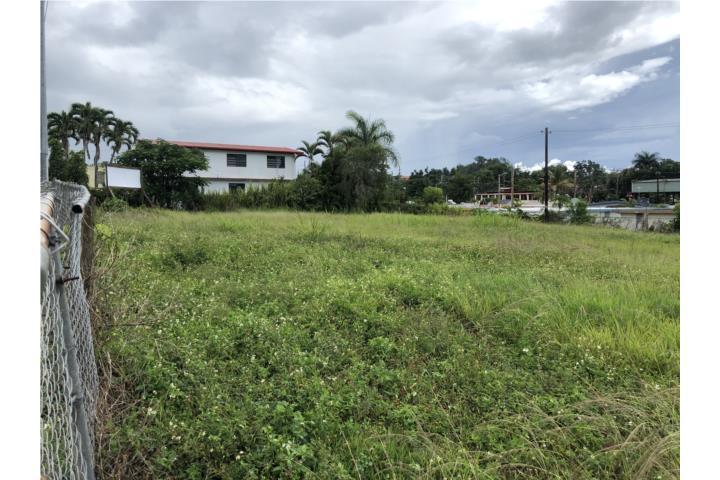 Robles Puerto Rico