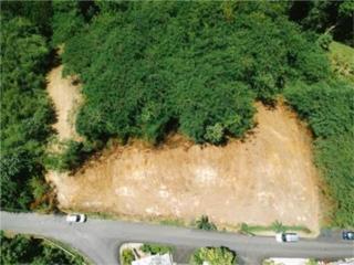 Bo. Puntas Carr 413 Km 4.4 Int Sector Vereno