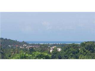 El Verde Puerto Rico