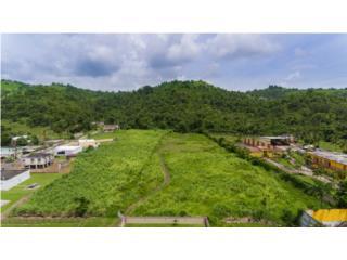 14.5 cuerdas de terreno en Bo. Calabazas