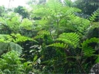 El Yunque Rain Forest 90 cuerdas