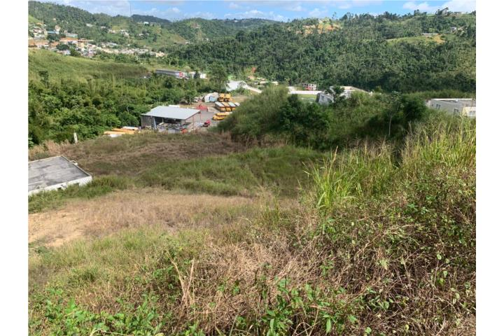 Helechal Puerto Rico