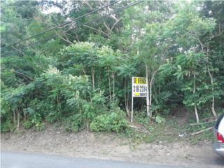 Finca en Sector Guasabaras, Rio Canas