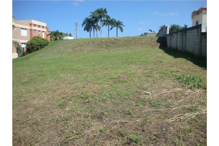 Rabanos Puerto Rico