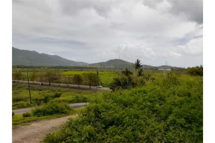Calzada Puerto Rico