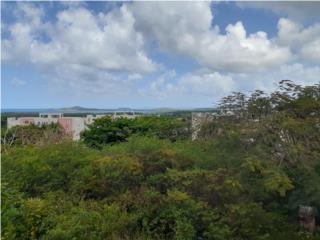 Terreno 3 Cuerdas Ceiba frente Puerto Del Rey