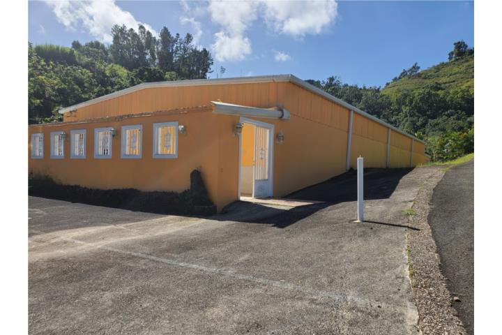 Palmarito Puerto Rico