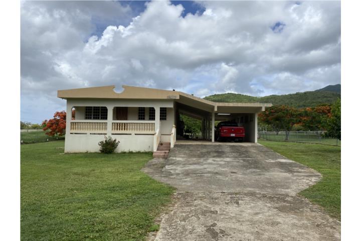 Pitahaya Puerto Rico