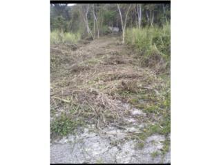 Terreno en Bo. Montellano, Cayey