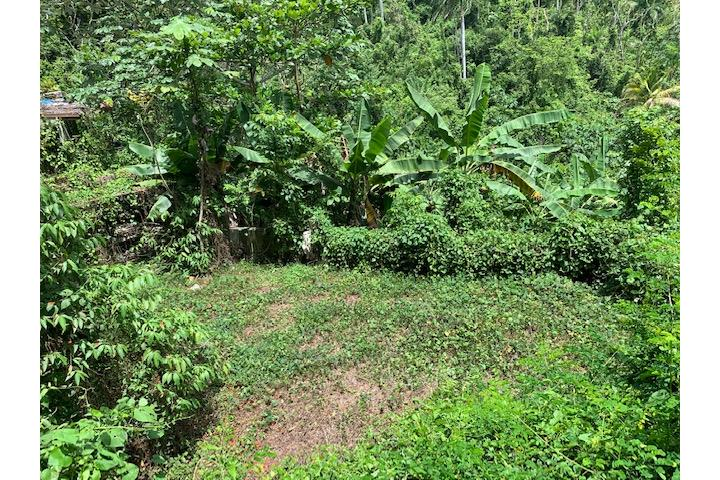 Guaraguao Puerto Rico