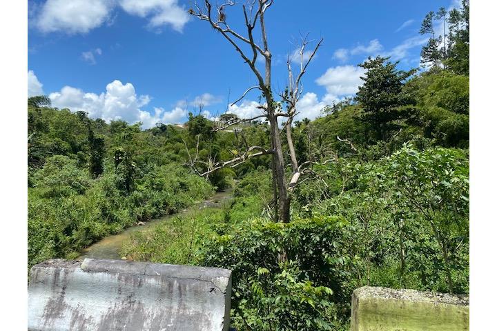 Negros Puerto Rico