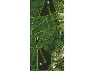 OPCIONADA, 15 Cuerdas en la falda del Yunque