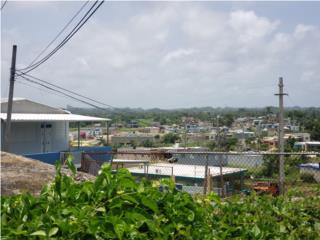 Bo. Ceiba Alta