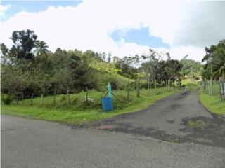 CEIBA-BO SONADORA- 1,400 MC CON QUEBRADAS