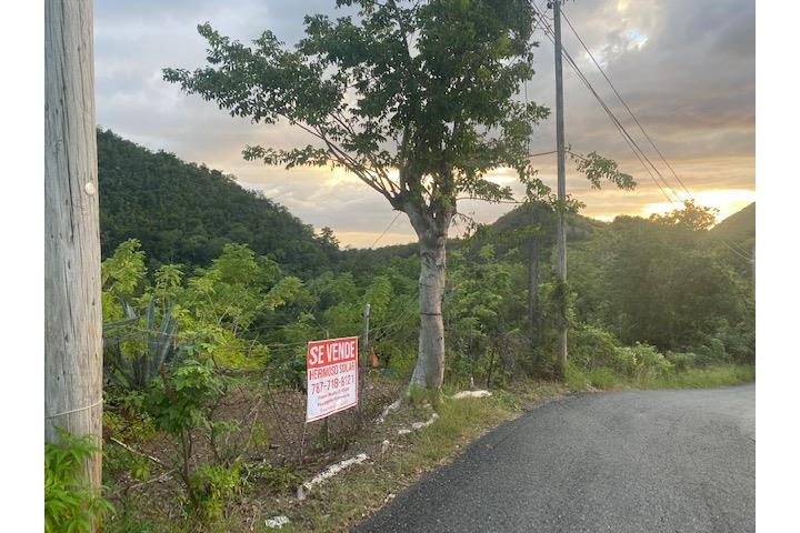 Caguabo Puerto Rico