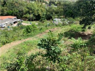 Terreno, Barrio Arenas, Cidra