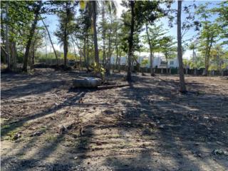 Solar Dorado beach plantation