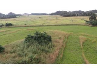 Un Lote  totalmente plano 2. 3 acres