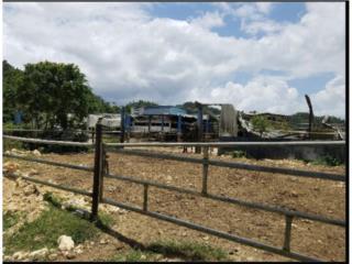124 Cuerdas de Terreno Arecibo- Vaquería