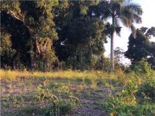 Bo. Guaraguao Abajo, Bayamón