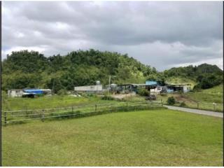 147 Cuerdas Arecibo - Vaquería y 3 Residencia