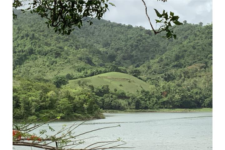 Jagual Puerto Rico