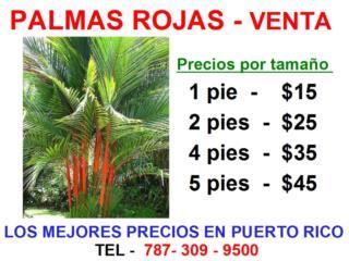 Palmas Rojas al mejor precio del mercado , Puerto Rico
