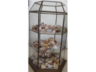 Colección de caracoles variados pequeños, Puerto Rico