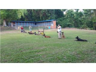 Another Level Dog Training - Clases - Cursos Puerto Rico