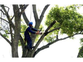 Amorales Landscaping - Mantenimiento Puerto Rico