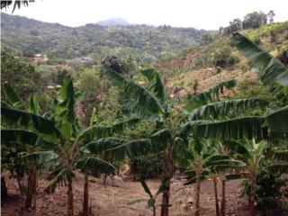 Finca Colinda Bosque del Pueblo Adjuntas, Adjuntas Real Estate Puerto Rico