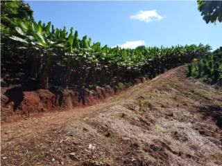 Farm 120 Acres (124 Cdas) 3/1, Gazebo & River, San Sebastián Real Estate Puerto Rico