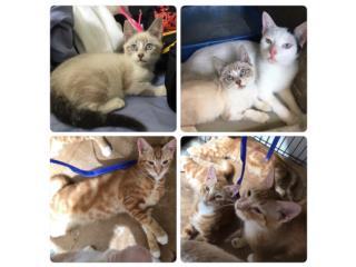 Hermosos gatitos de 3 y 4 meses Puerto Rico