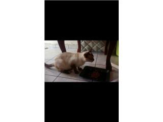 Gatos para adoptar Puerto Rico