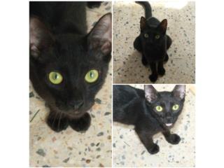 Gatita Negra (Princess) Puerto Rico