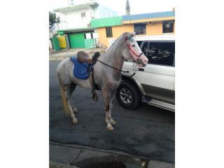 Se vende hermosa yegua mora Puerto Rico