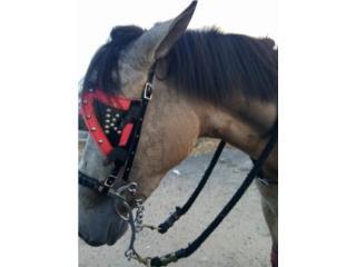 caballo balla 3 andares  Puerto Rico