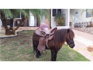 Precioso Pony color chocolate Puerto Rico