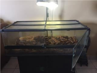 Pecera terrera reptiles $ 125 Puerto Rico