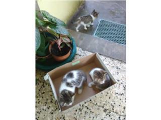 Regalo tres gatito blanco y negro Puerto Rico