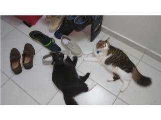 Se regalan Gatos cariñosos Puerto Rico