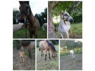 caballo Puerto Rico