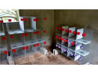 Separadores de pollitos 4 modulos 39 espacios Puerto Rico