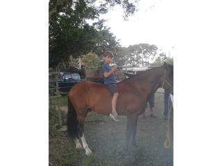 caballo entero  Puerto Rico