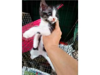 Regalando una gatita de 2 meses  Puerto Rico