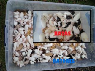 COMIDA PARA TU REPTIL ( RATAS Y RATONES ) Puerto Rico