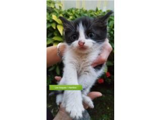 Puerto Rico ¡Adopta un lindo gatito!, Perros Gatos y Caballos