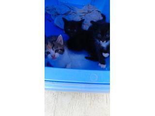 Se regalan gatitos un macho y una hembra Puerto Rico