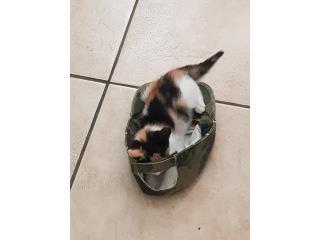 Adopta esta gatita Puerto Rico