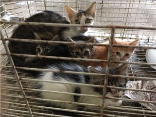 Adopción de Gatos! Puerto Rico